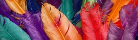 amazing-multicolor-feathers-header