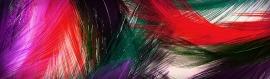 multicolor-fine-feathers-header