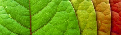 various-colors-leaves-natural-abstract-web-header