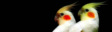 Pair of White Birds Header