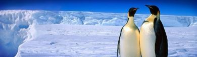 royal-leader-penguins-and-ice-lake-header