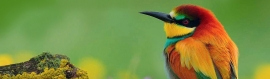 beautiful-colorful-east-african-bird-web-header