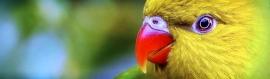 yellow-bird-with-red-beak-website-header