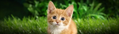 cute-tabby-kitten-on-grass-website-header