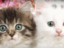 Cats & Kittens Headers