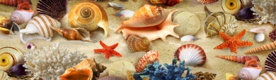 colorful-sea-shells-and-corals-on-the-sand-website-header