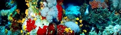 colorful-sea-corals-header