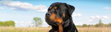 rottweiler-dog-and-nature-website-header