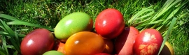 easter-colored-eggs-header
