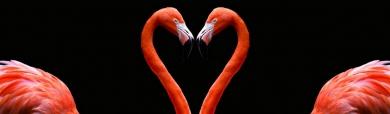flamingo-love-and-heart-website-header