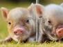 Farm Animals Headers