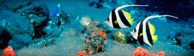 black-striped-fishes-headers