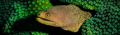 dangerous-moray-eels-header