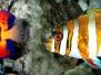 Fish & Aquatic Headers