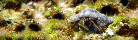 outsider-crabs-header