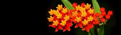eye-catching-wildflower-header