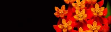macro-wildflower-header