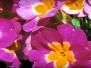 Flowers Headers
