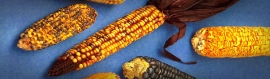 grilled-maize-header