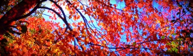beautiful-tree-blog-header