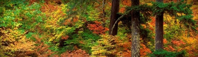 charming-forest-trees-website-header