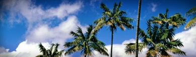 long-palm-trees-website-header