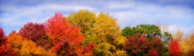 wonderful-colors-autumn-forest-trees-web-header
