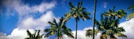 long-palm-trees-website-header