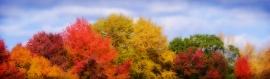 wonderful-colors-autumn-forest-trees-web-header