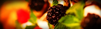 delicious-berry-fruit-website-header