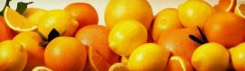 fresh-orange-and-lemon-web-header