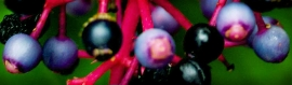 fruits-blog-header