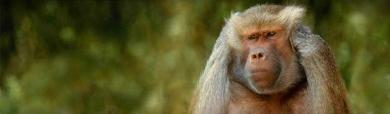 amazing-funny-monkey-website-header