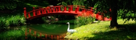 chinese-garden-with-bridge-and-white-goose-header
