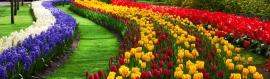 flowers-garden-corrugated-color-stripes-website-header