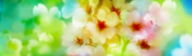 beautiful-summer-flowers-girly-background-header