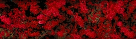wonderful-red-flowers-girly-background-header