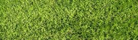 grass-background-header