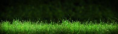 Fine Grass Background Header