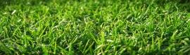 Wonderful Grass Background Header