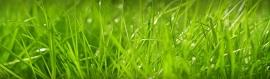Beautiful Grass Background Header