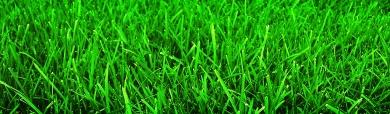 Amazing Beautiful Grass BG Header