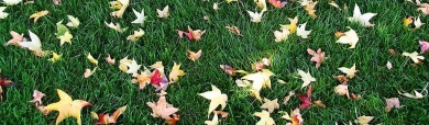 green-grass-and-autumn-leaves-header