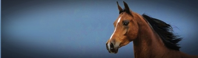 arab-horse-blue-header