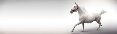 white-single-horse-header