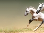 Horses Headers