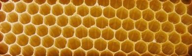 bee-house-background-header