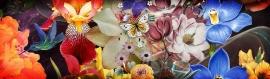 flowers-illustration-webpage-header