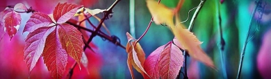colorful-plants-header