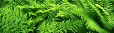 green-plants-header